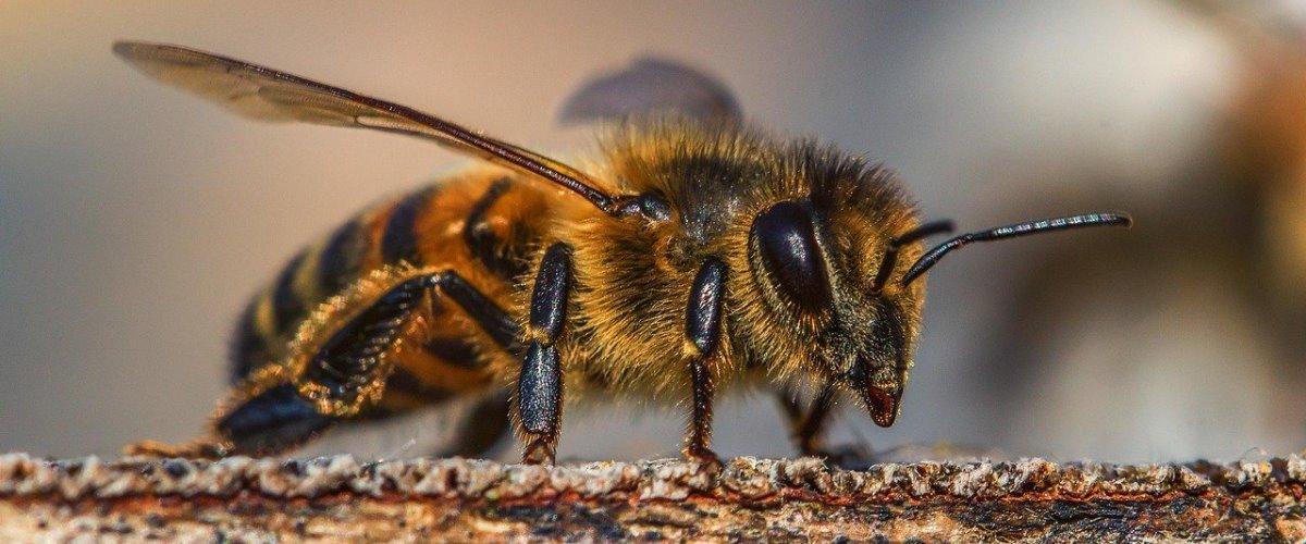 Сайт про пчёл и пчеловодством Моя Пчела