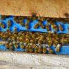 12 особенностей применения пчелопродуктов
