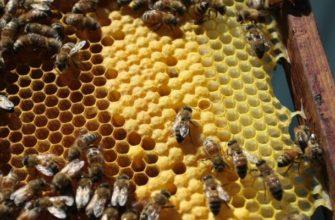 Как и зачем пчелы делают мед