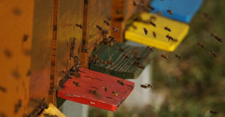 выбор пчел