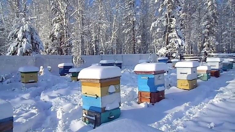 кормление пчел в зимний период