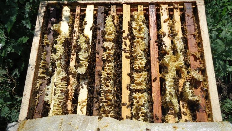 отводок из молодых и пчел в возрасте