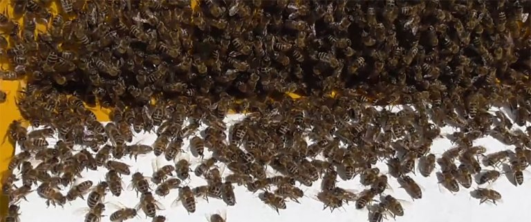 переселение пчел