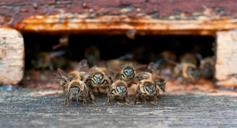 Помогаем семьям пчел