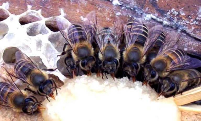 Прикорм пчел зимой