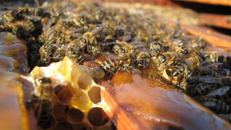 прикорм зимой медом