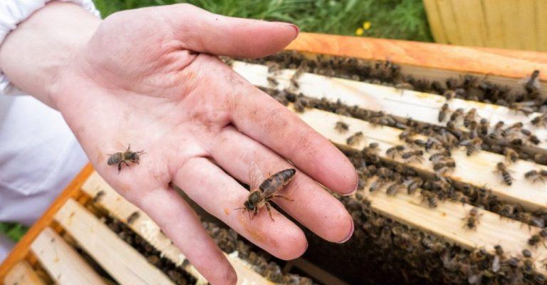 Расширение гнезд пчел весной