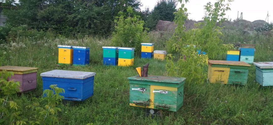 Содержание пчел в двухкорпусном улье
