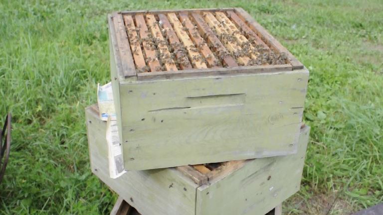 Содержание пчел в ульях Рута