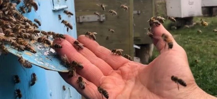 Содержание пчёл в 16 рамочном улье