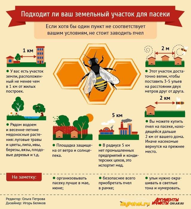 Инфографика пчеловода АИФ