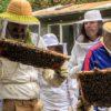 Новшество в пчеловодстве