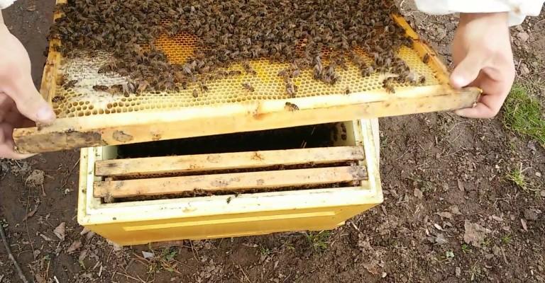 Особенности-содержания-пчел