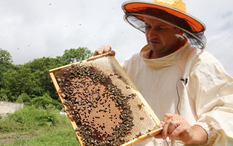 Пчеловод инфо на MyPchel.ru