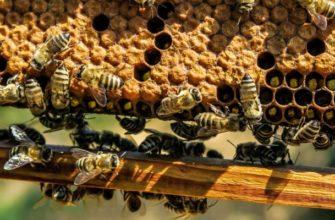 пчеловодство на 6 рамок