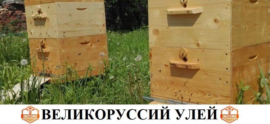великорусский улей